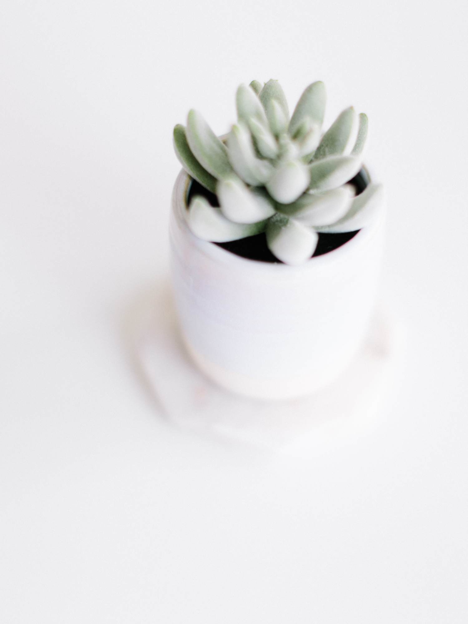 A succulent plant rests on a clean, white surface in airy light at Tribe Detroit for a brand photoshoot in Michigan