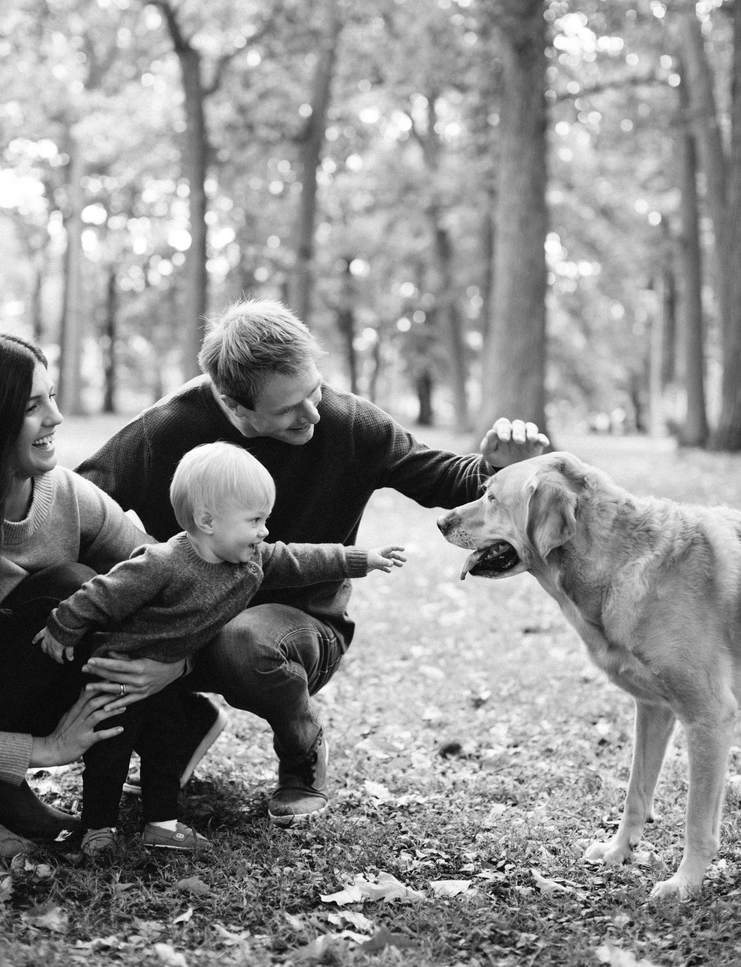 A little boy reaches to pet his dog during a lifestyle family photoshoot in Royal Oak, Michigan